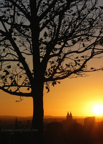 Tree & Liverpool at Sunset - 20071123-liverpool-tree-sunset.jpg - Anna Nielsson
