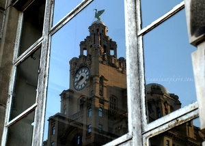 Liver Building Reflection