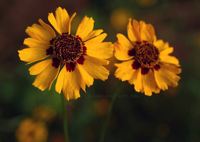 Yellow Flowers - 20101024-yellow-flowers.jpg - Anna Nielsson
