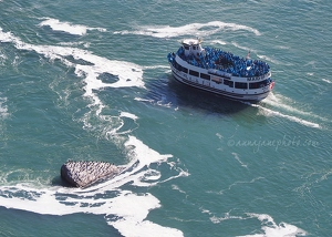 Maid of the Mist & Cormorants