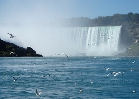 Horseshoe Falls & Birds
