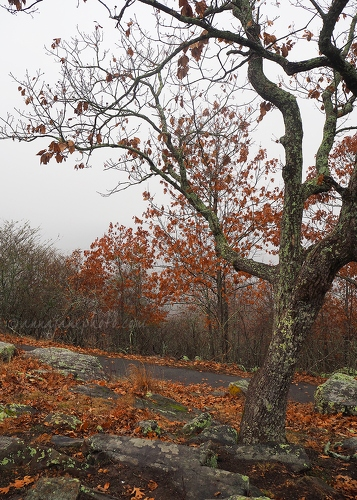 Kennesaw Mountain Trees - 20161226-kennesaw-mountain-tree.jpg - Anna Nielsson